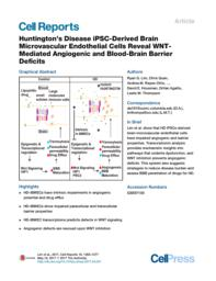 thumnail for Huntington's Disease iPSC-Derived Brain Microvascular Endothelial Cells Reveal WNT-Mediated Angiogenic and Blood-Brain Barrier Deficits.pdf