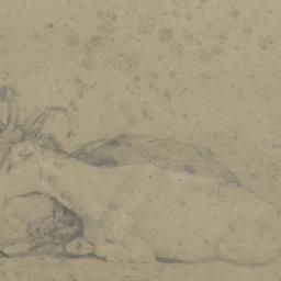 Two Goats Lying Down