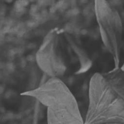 Flowers growing 1931