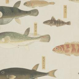Group of Nine Fish from the...