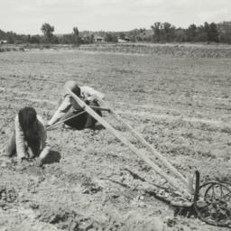 Several People Seeding the ...