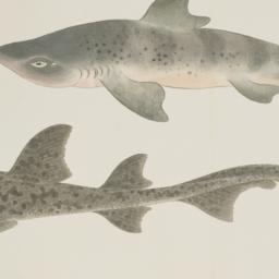 Illustratedbook of fish an...